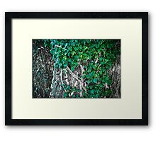 Creeper 1 Framed Print