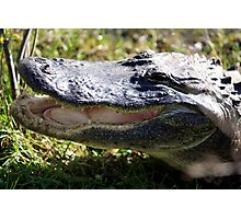 Wild Gator Photographic Print