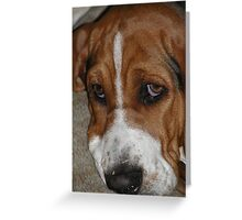 cute little wrinkely face Greeting Card