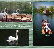 Swan Boats on the Public Garden, Boston by Brenda Anderson