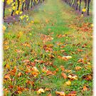 Yarra valley vines by Andrew Wilson