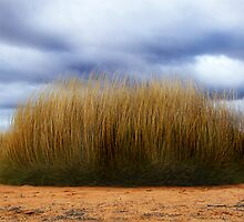 Spinifex. by binjy