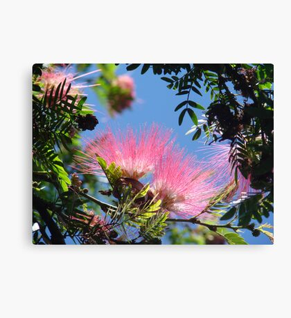 Bottlebrush Beauty Canvas Print