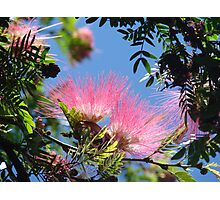 Bottlebrush Beauty Photographic Print