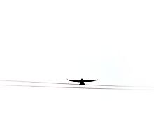 Bird On A Wire by TudorSaxon