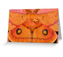 the moth outside Greeting Card