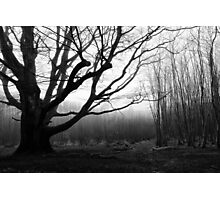 Dark Wood in England Photographic Print