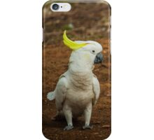 Australian Cockatoo in the Wild iPhone Case/Skin
