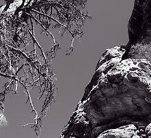 Desert Treescape by Benjamin Padgett