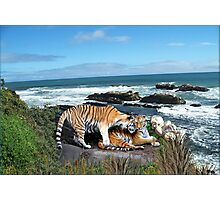 856-Wild Affection Photographic Print