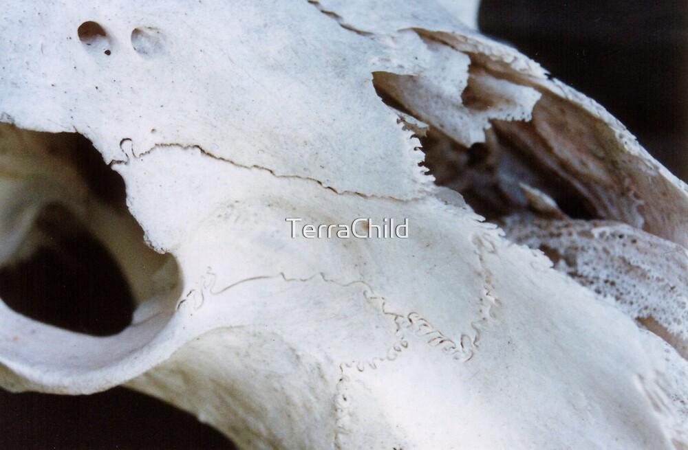The Skull by TerraChild