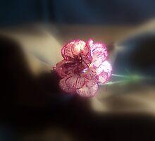 Carnation by babyangel