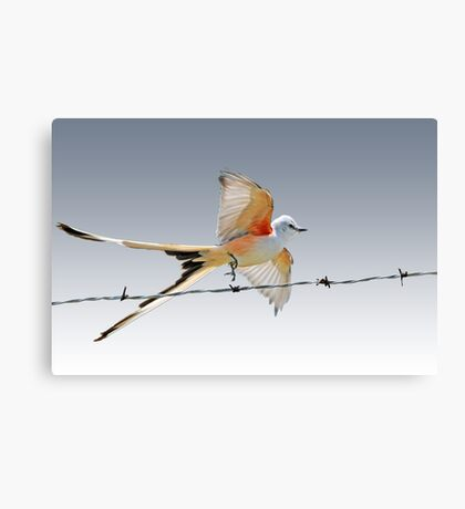 Gracefulness Canvas Print