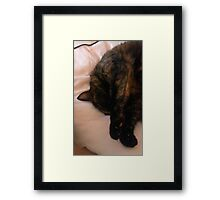 Cat Napping Framed Print