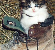 Toot in a Boot by Trish  Bowen
