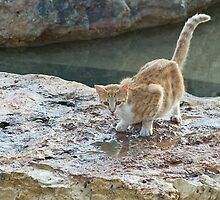Wary Cat by Michael Redbourn
