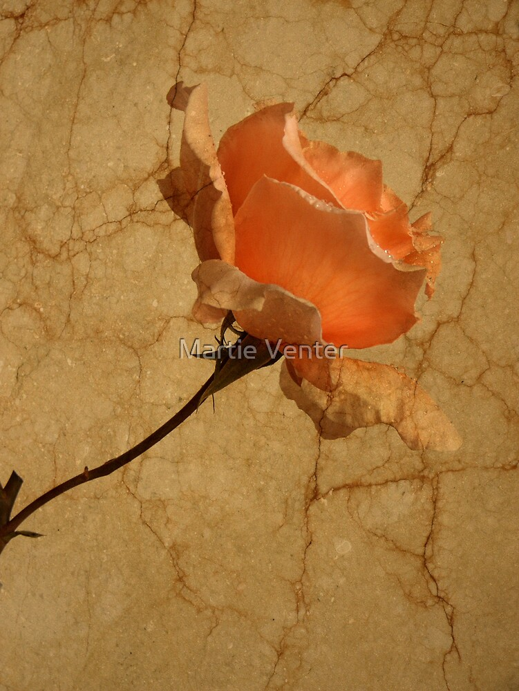 Marble Rose by Martie Venter