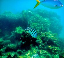 Commonly Seen Tropical Fish by Guyzimijz