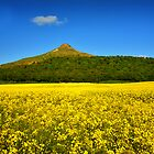 Roseberry Topping Oilseed Rape Field by Stewart Laker