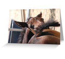 cute foal  Greeting Card