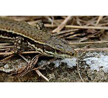 Reptile Photographic Print