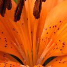 Orange Burst by CinB