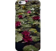 A Profusion of Cardinal Red Waterlilies iPhone Case/Skin