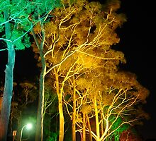 Tree lights by Penny Smith