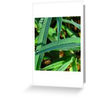 dew Greeting Card