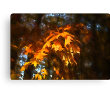 Spotlight on the Golden Maple Leaves - Fall Forest Impressions Canvas Print