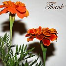 Thank You by shellyb