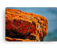 the warmth Canvas Print