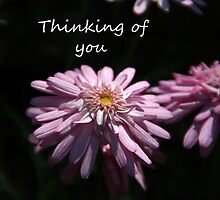 Thinking of you by Kimberly Palmer