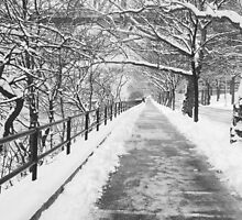 Snowy Lane B&W by Bernadette Claffey