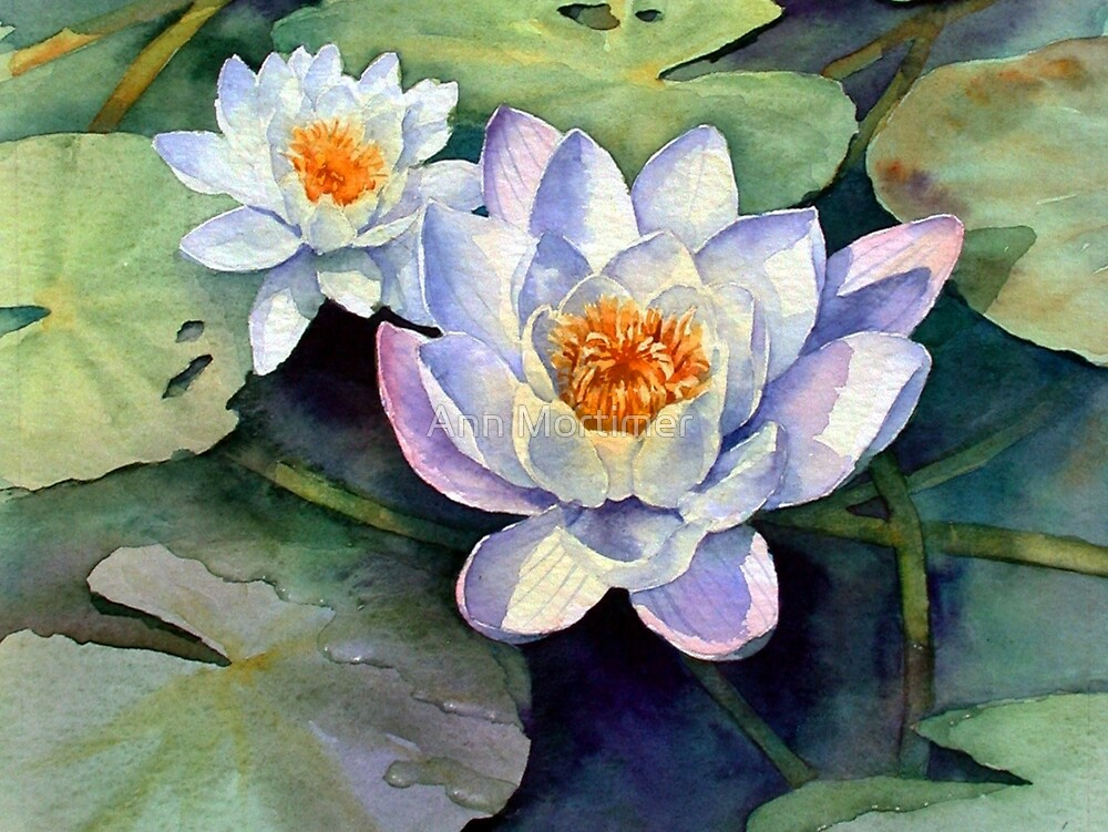 Waterlilies by Ann Mortimer