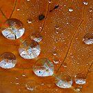 autumn drops by Victor Pugatschew