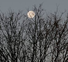 Winter Moon - Southern Hemisphere by Paul Lindenberg