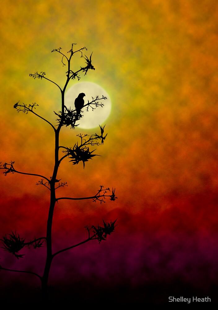 In The Spotlight by Shelley Heath