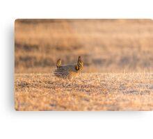 Prairie Chicken 2013-12.jpg Metal Print