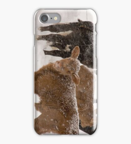 Calves in The Snow iPhone Case/Skin