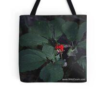 American Ginseng w/red Berries Tote Bag