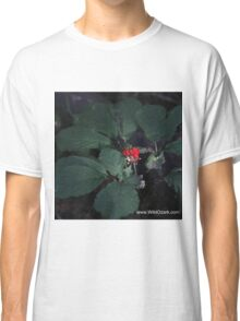 American Ginseng w/red Berries Classic T-Shirt