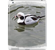 Long Tailed Duck iPad Case/Skin