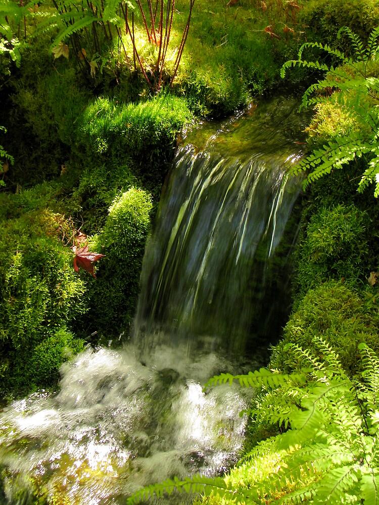 Garden Stream by Rebecca Cruz
