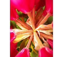 Centre Flower Photographic Print