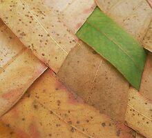 Leafweaver by TerraChild
