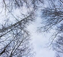 Trees and sky 2 by AnnArtshock
