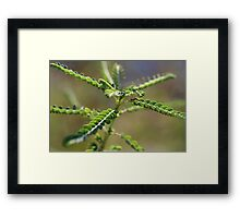 An insect? Framed Print