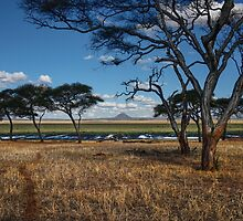 The Swamp - Tarangire National Park - Tanzania by Susana Weber