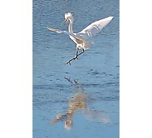 another annoyed Cattle Egret Photographic Print
